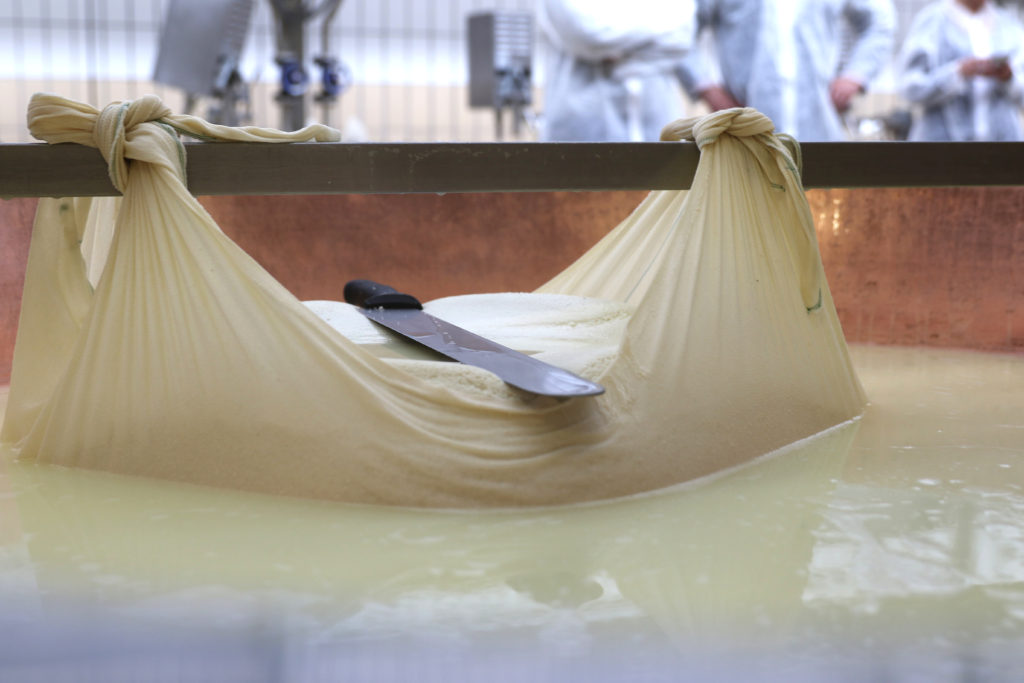 italy parmigiano reggiano milk cheese making italy